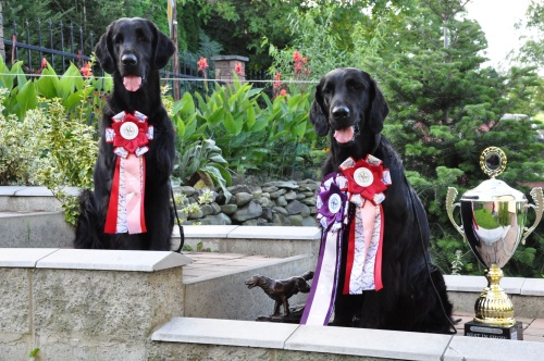 Flat Coated Retriever FCR Trophy Show 2017 Gargamel Oasis of Peace, Caci´s Dark Chocolate of Love