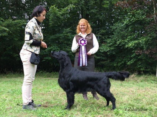 Flat Coated retriever Caci´s Dark Chocolate of Love FCR Trophy Show 2017